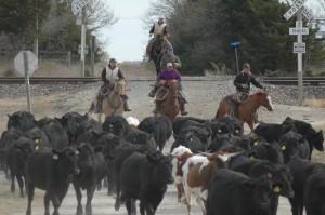 Working Cattle in the Flint Hills