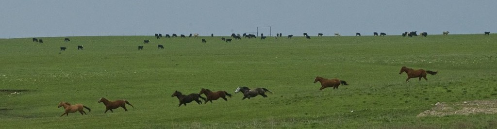 Wayne and Marsha's horses see the golfers coming!