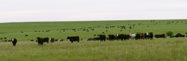 Springtime on the Prairie