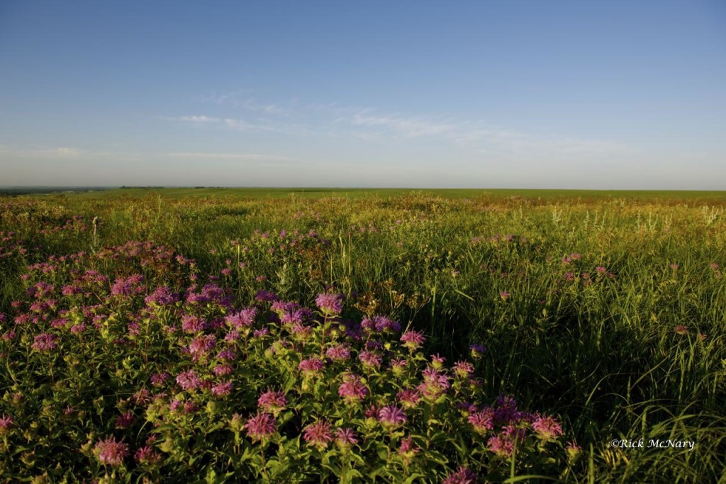 The Wind Lays Soft Against the Prairie