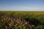 prairie 2