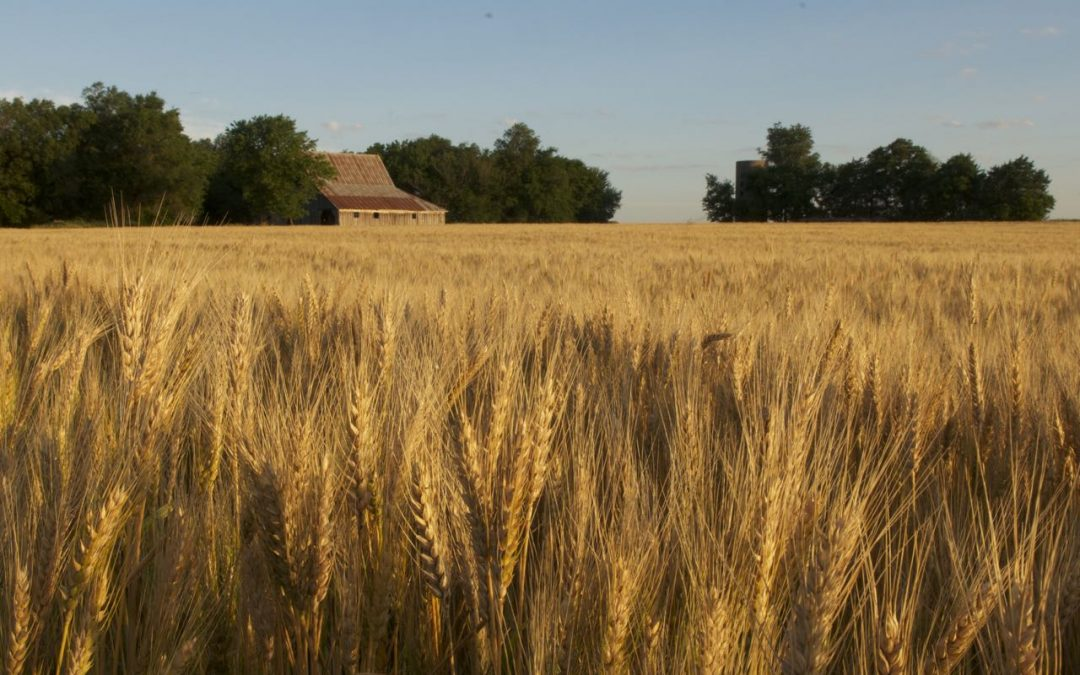 An Open Letter to Farmers